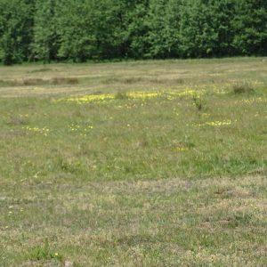 Tak obecnie wygląda teren po usunięciu dzikiego wysypiska.